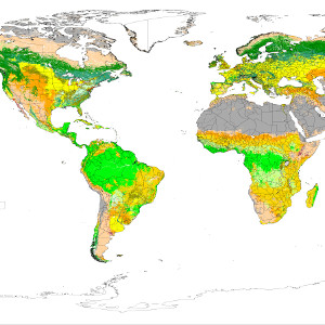 Review of global and regional land cover products